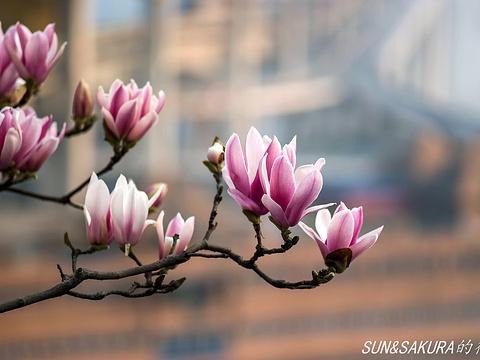 重庆大学旅游景点图片