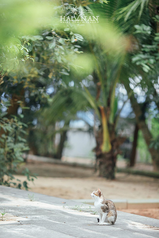 """""""门票:15元穿越百年历史,宋氏祖居遇见喵星人不辜负每一天,大概是最简单又最难的愿望或者说是目标了_宋氏祖居""""的评论图片"""