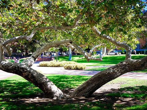 洛杉矶加利福尼亚大学旅游景点图片