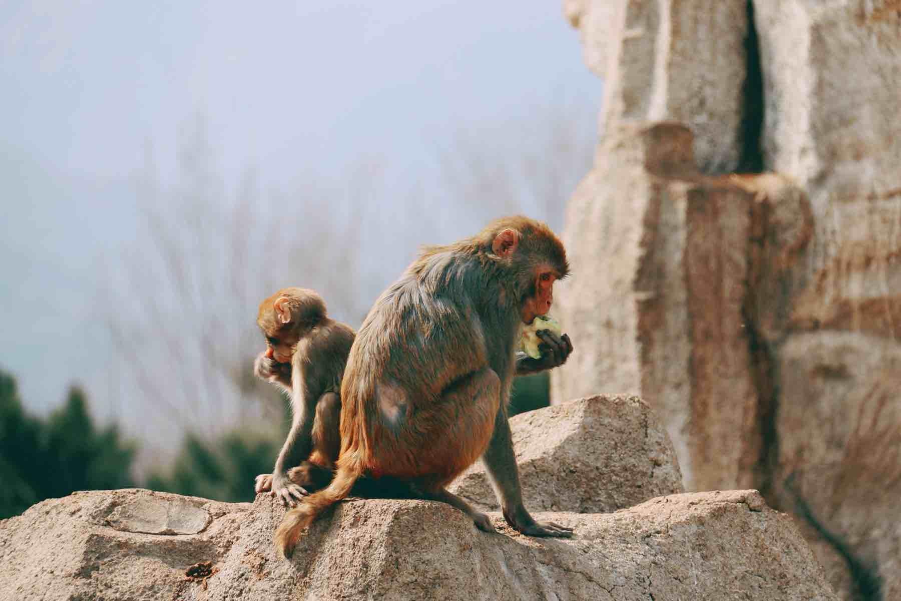 八达岭野生动物世界