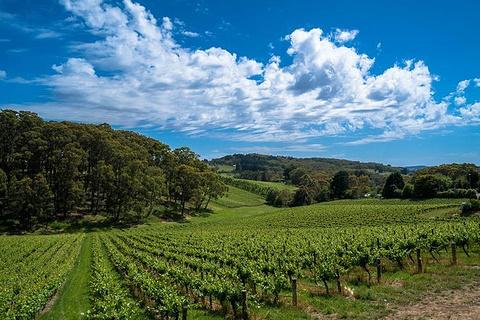 奔富葡萄酒庄旅游景点攻略图