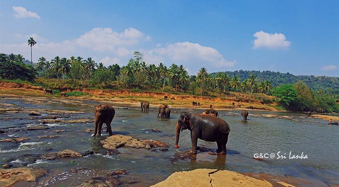 品纳维拉大象孤儿院图片