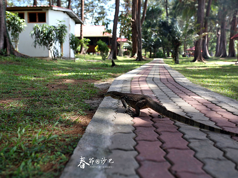 迪加岛国家公园旅游景点图片