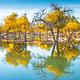 金塔沙漠胡杨林景区
