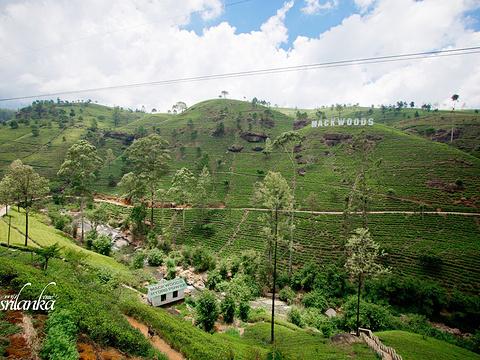 努瓦勒埃利耶茶园旅游景点图片