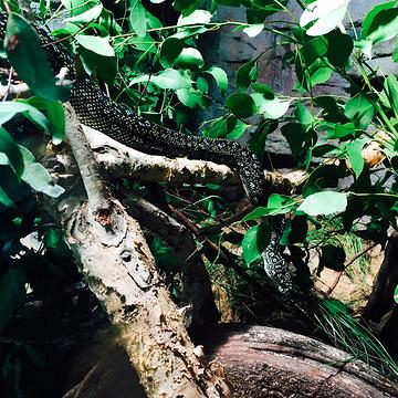 悉尼野生动物园