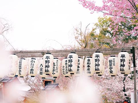 平野神社旅游景点图片