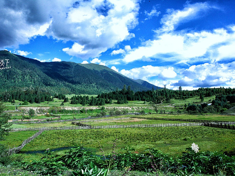 鲁朗风景区旅游景点图片