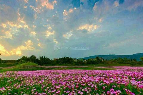 龙湾国家湿地公园的图片