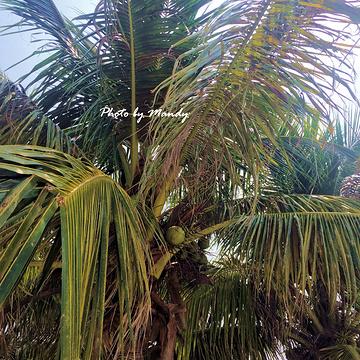 北洛湾风景区旅游景点攻略图