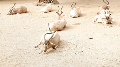 广州动物园旅游景点攻略图