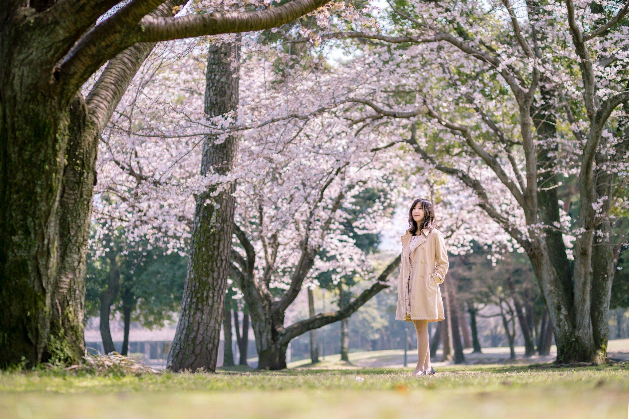 邂逅樱花祭,天海邮轮日本赏樱归来(佐世保,别府自由行赏樱攻略)