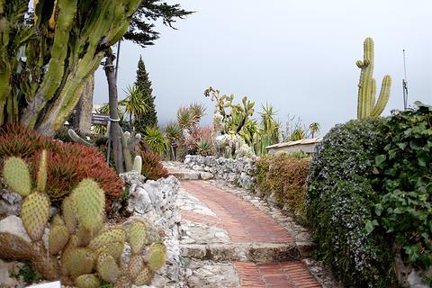 山顶植物园