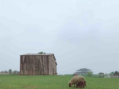 仙凤三宝农业休闲观光园旅游景点攻略图