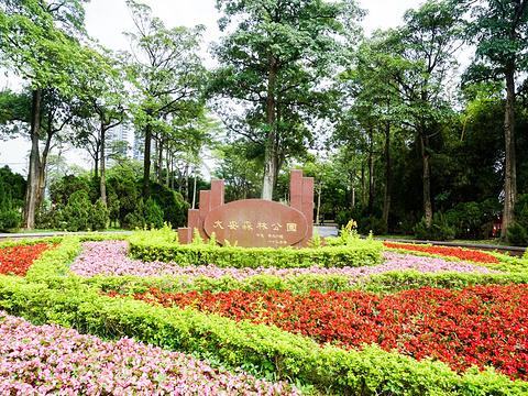 大安森林公园旅游景点图片