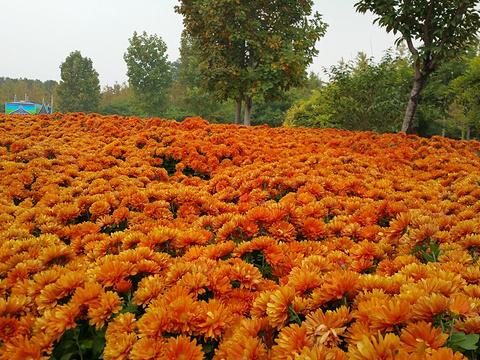 北京国际鲜花港旅游景点图片