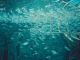 亚特兰蒂斯水世界