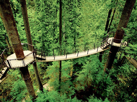 卡皮拉诺吊桥公园旅游景点图片