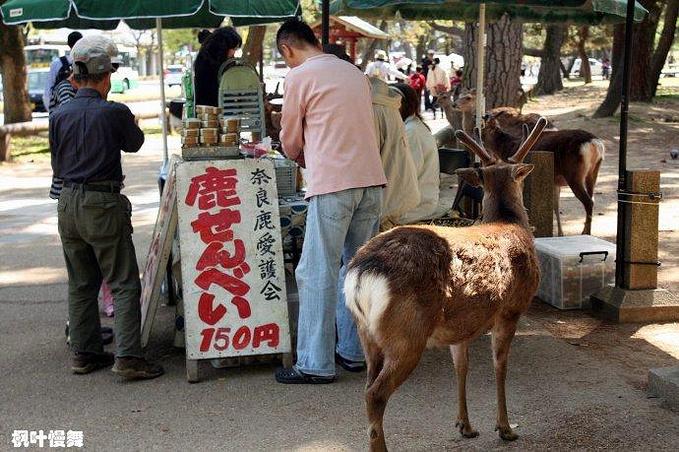 奈良公园图片