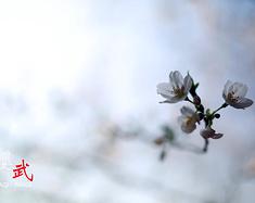 好景正当时,周末武汉高铁踏春赏樱游