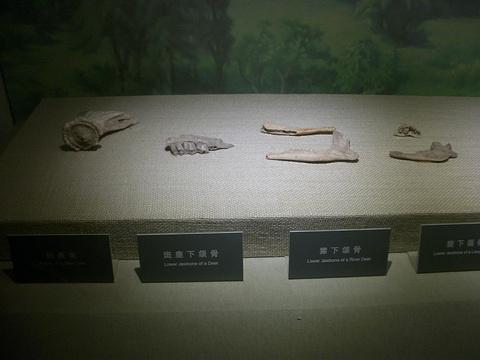 西安半坡博物馆旅游景点图片