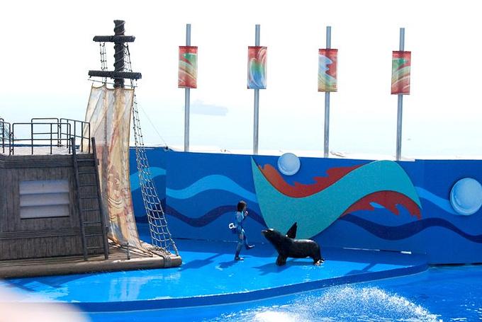 2、海洋公园的经典的剧目表演图片