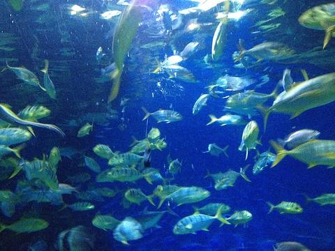 天津海昌极地海洋公园旅游景点图片