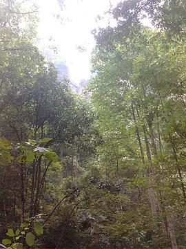 大洪山绿林寨旅游景点攻略图