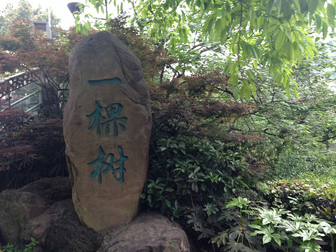南山一棵树观景台旅游景点攻略图
