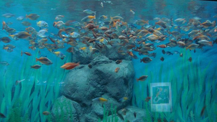 长风公园水族馆门票_2020水族馆成人门票160元/人,儿童110元,价格不低,如果带小朋友 ...