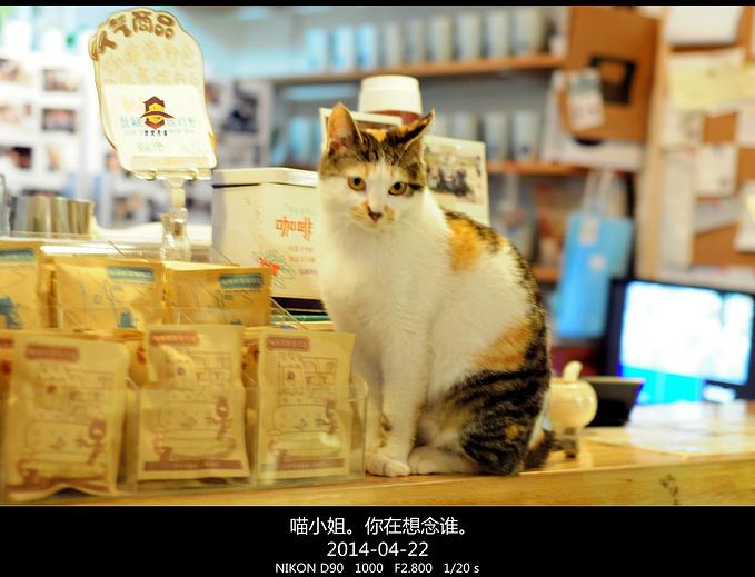 猫的天空之城概念书店(平江路店)图片