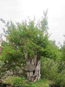 黄果树盆景园旅游景点攻略图