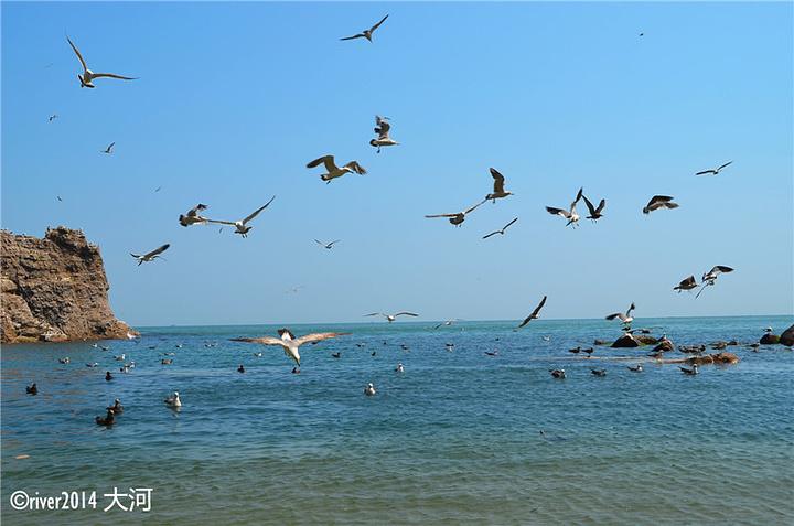 """""""这里的海水非常干净,呈现出北方不多见的蓝色,一路上都有海鸥落在礁石上或者飞在天上,而且不怕人,..._海驴岛""""的评论图片"""