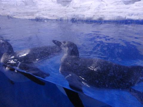 东京极地海洋馆旅游景点攻略图