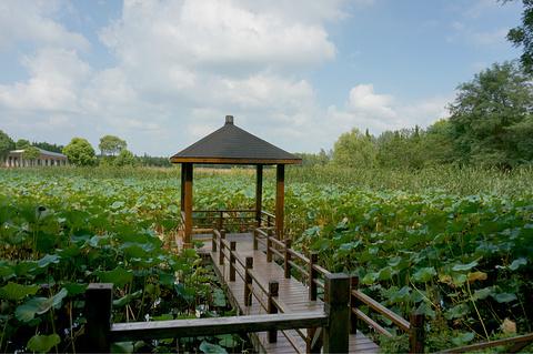 东平国家森林公园的图片