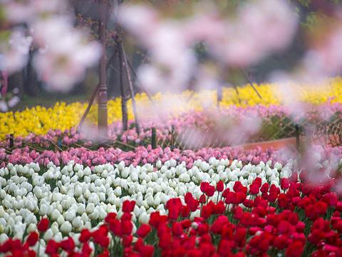 东湖磨山景区旅游景点图片