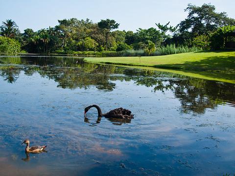 新加坡植物园旅游景点图片