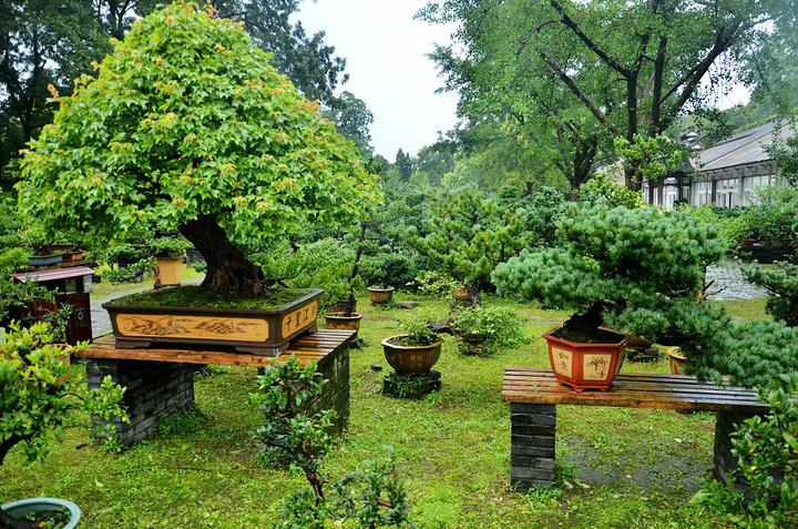 """""""特别是对于植物爱好者、园林艺术爱好者更值得来这里看看了。所以我推荐夏末或初秋来此游玩_盆景园""""的评论图片"""