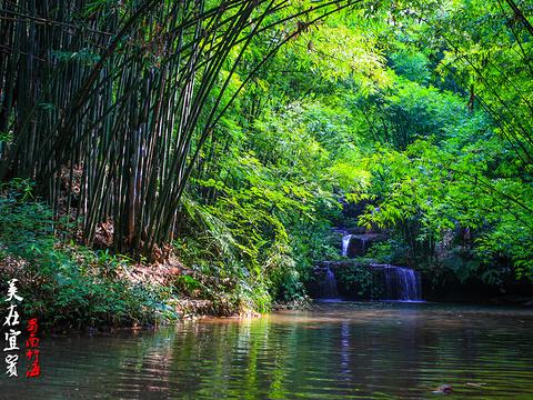 蜀南竹海旅游景点图片