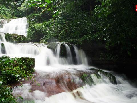 桫椤国家级自然保护区旅游景点图片