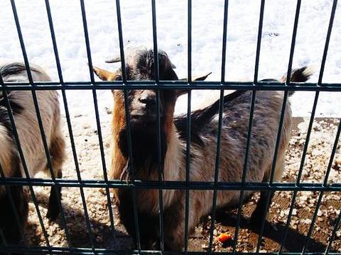 法兰克福动物园旅游景点图片
