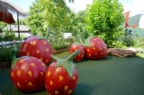 草莓园旅游景点攻略图