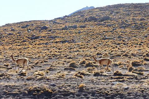 阿塔卡马沙漠旅游景点攻略图