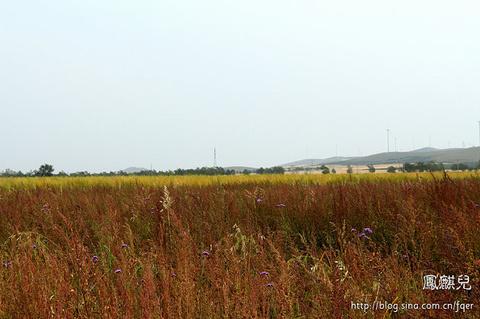 五花草甸旅游景点攻略图