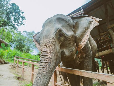 美莎大象营旅游景点图片