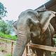 湄沙大象营