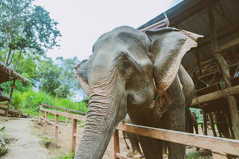 湄沙大象营的图片