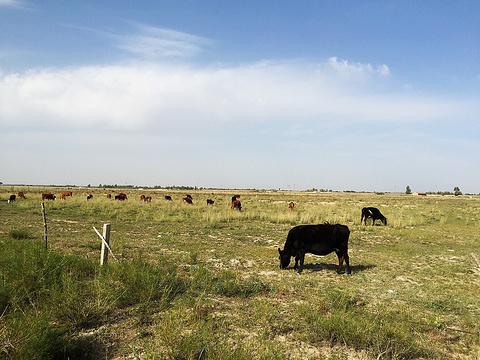 毛乌素沙漠旅游景点图片