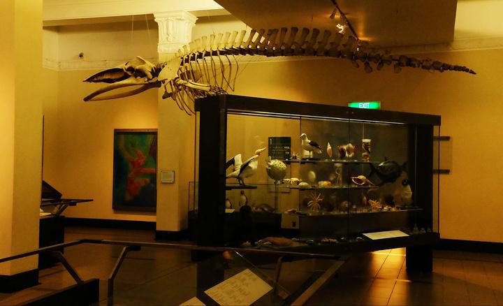"""""""奥克兰博物馆位于奥克兰公园内,是一座收藏..._奥克兰博物馆""""的评论图片"""