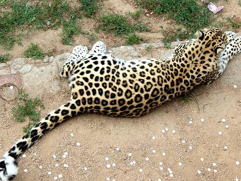 西霞口神雕山野生动物园旅游景点图片